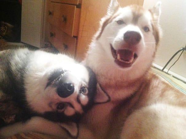 21 kutya barátság2