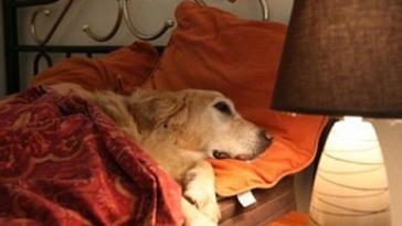 A férfi megkérdezte, beviheti-e kutyáját is a hotelbe1