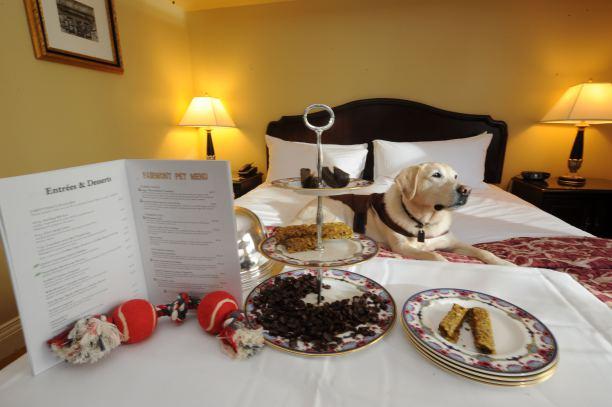 A férfi megkérdezte, beviheti-e kutyáját is a hotelbe2