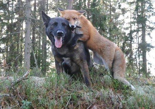 A kutya minden nap eltűnik az erdőben1