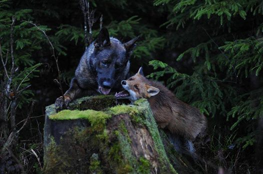 A kutya minden nap eltűnik az erdőben3