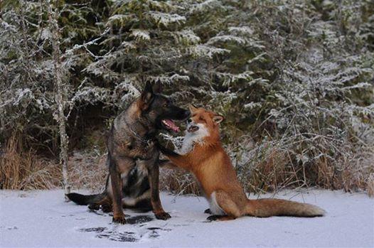 A kutya minden nap eltűnik az erdőben4