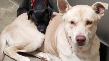 A menhelyen úgy döntöttek, hogy a két kutyát elaltatják1