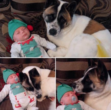 A terhes nő nem értette, kutyája miért nem hagyja abba az ugatást6