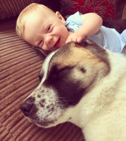 A terhes nő nem értette, kutyája miért nem hagyja abba az ugatást7