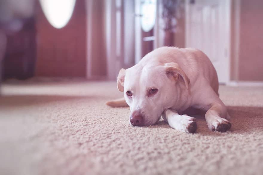 Az édesanya örökbe fogadott egy menhelyi kutyát10