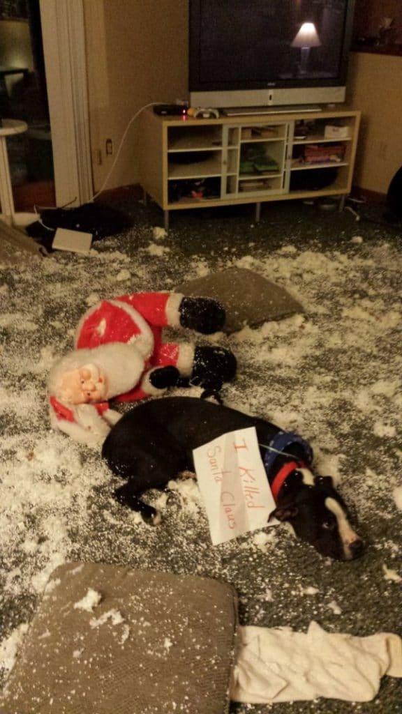 Ezek a kutyák megtalálták a módját, hogy romba döntsék a karácsonyt1
