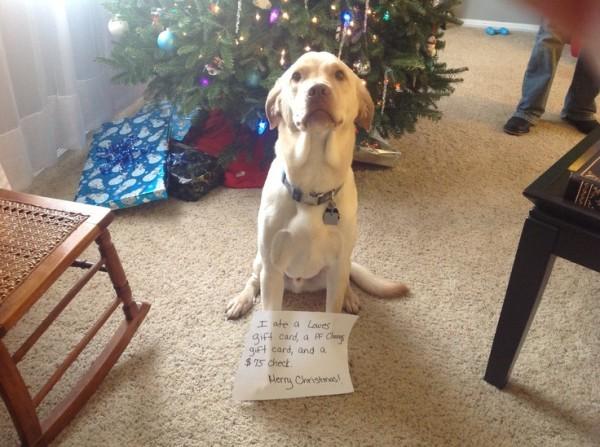 Ezek a kutyák megtalálták a módját, hogy romba döntsék a karácsonyt11