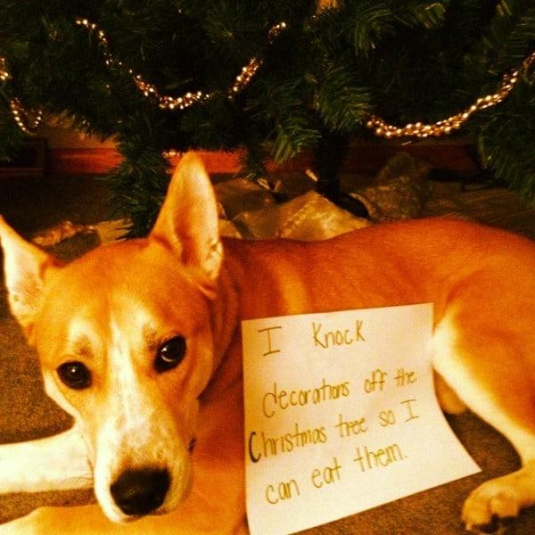 Ezek a kutyák megtalálták a módját, hogy romba döntsék a karácsonyt12