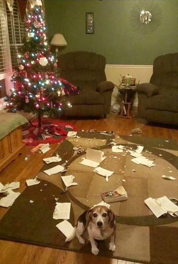 Ezek a kutyák megtalálták a módját, hogy romba döntsék a karácsonyt2