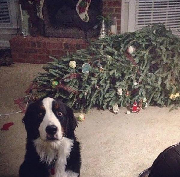 Ezek a kutyák megtalálták a módját, hogy romba döntsék a karácsonyt4
