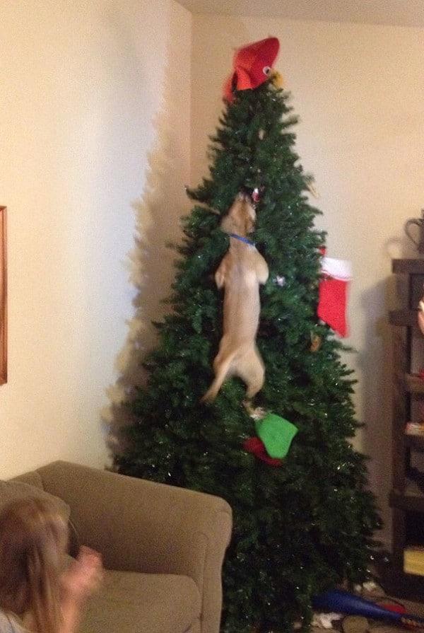 Ezek a kutyák megtalálták a módját, hogy romba döntsék a karácsonyt5