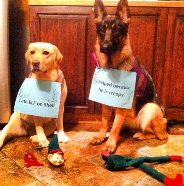 Ezek a kutyák megtalálták a módját, hogy romba döntsék a karácsonyt6
