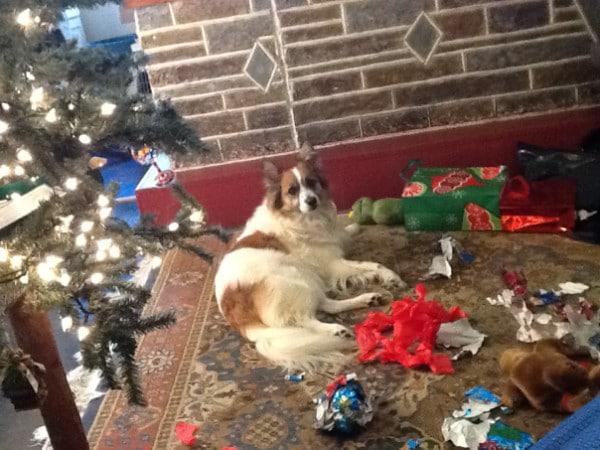Ezek a kutyák megtalálták a módját, hogy romba döntsék a karácsonyt7