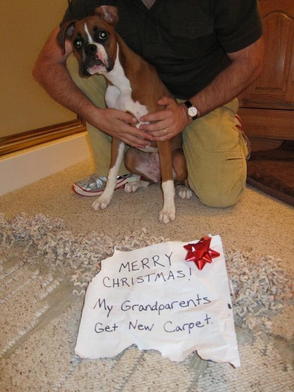 Ezek a kutyák megtalálták a módját, hogy romba döntsék a karácsonyt9
