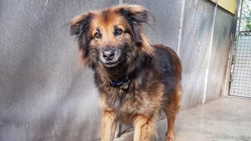 félén kutya 10 éve él menhelyen