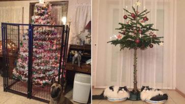 kisállat-biztos karácsonyfák