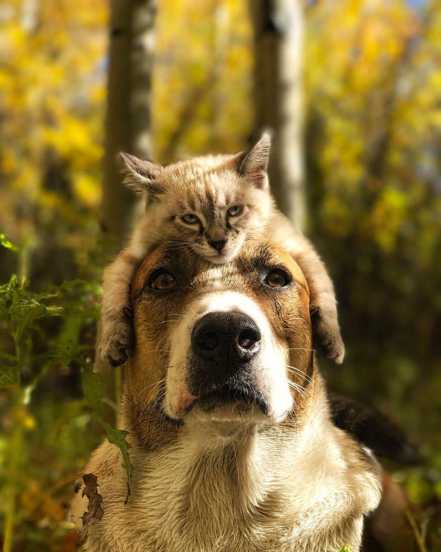 kutya és macska együtt utazik15