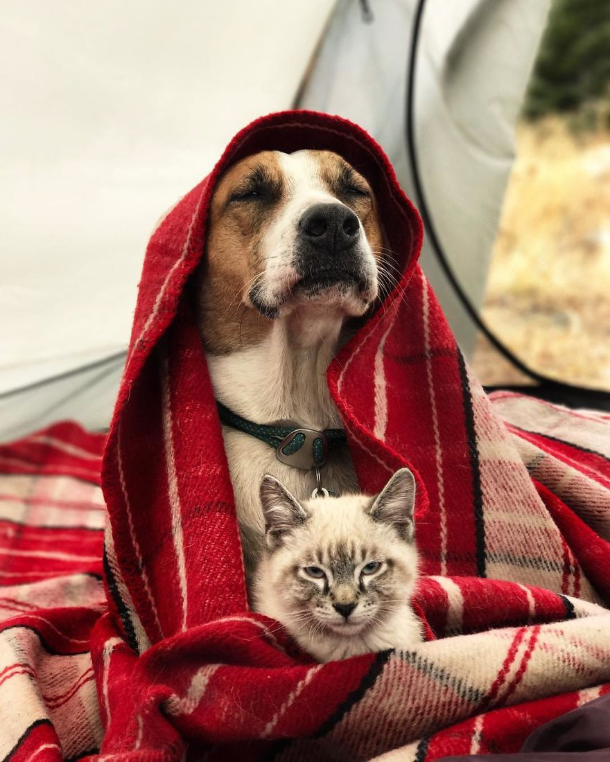 kutya és macska együtt utazik17