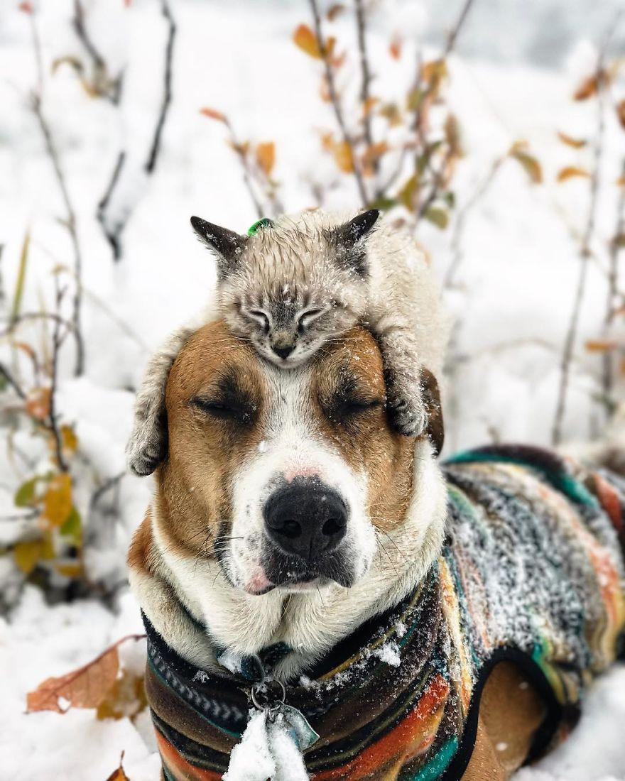 kutya és macska együtt utazik20