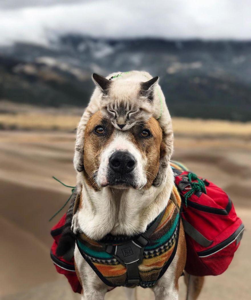kutya és macska együtt utazik4