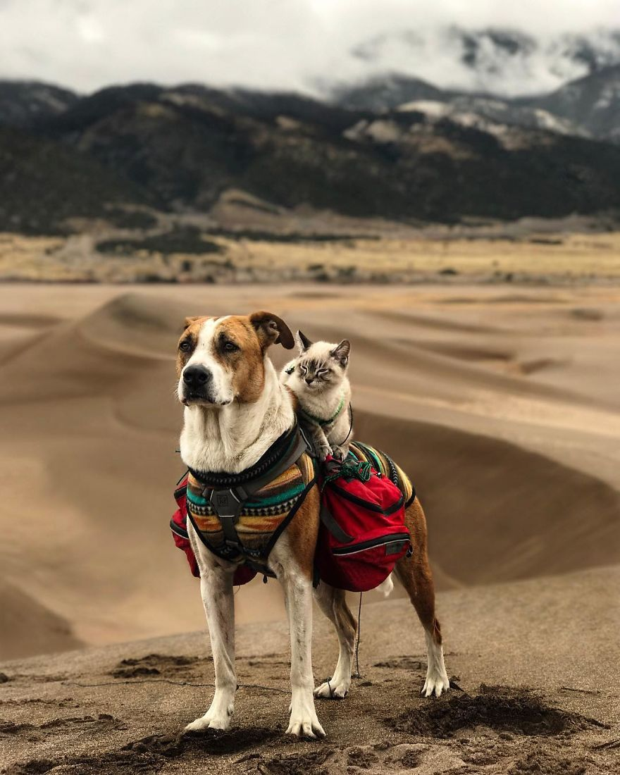 kutya és macska együtt utazik8