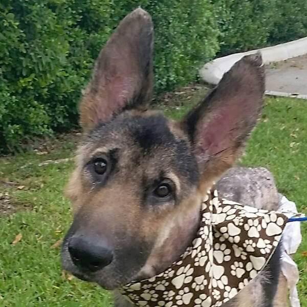 súlyosan bántalmazott kutya most tapasztalja meg először a SZERETETET2