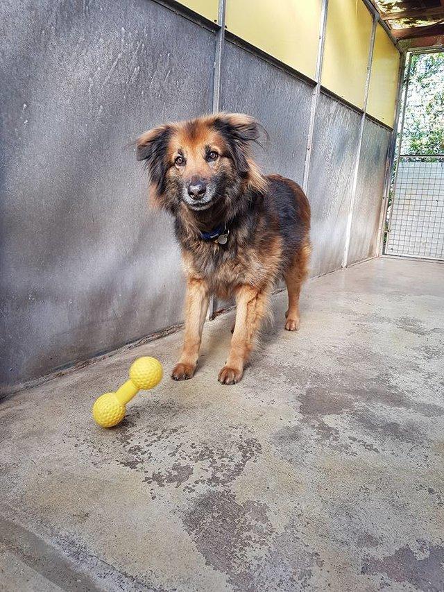 szomorú kutya már 10 éve élt a menhelyen1