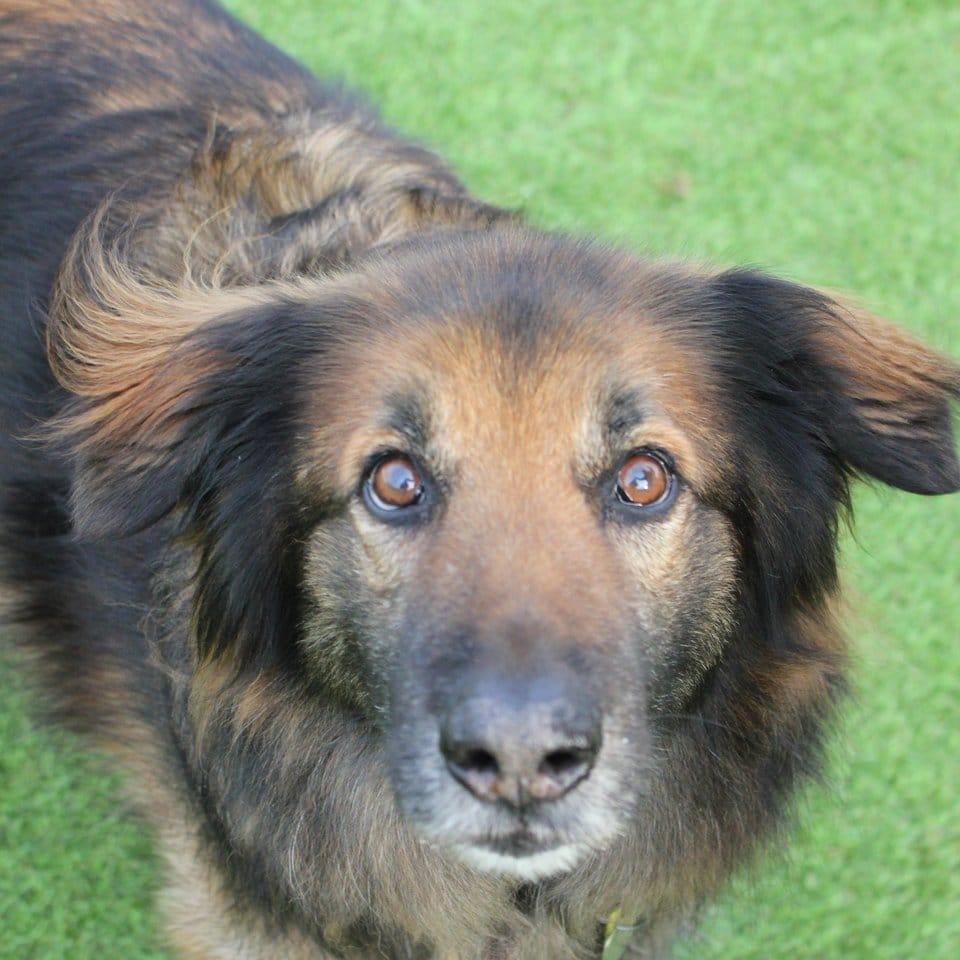 szomorú kutya már 10 éve élt a menhelyen2