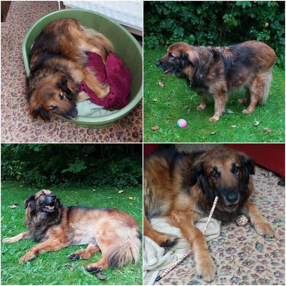 szomorú kutya már 10 éve élt a menhelyen5