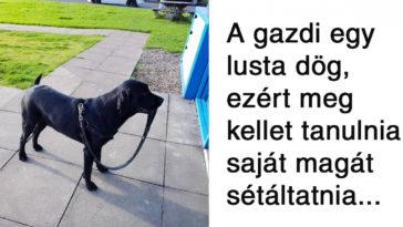 """17 kutya, aki tettével kétség kívül kiérdemelte a ,,jó kutya"""" jelzőt"""