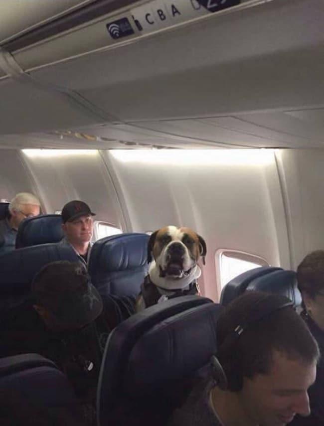"""17 kutya, aki tettével kétség kívül kiérdemelte a ,,jó kutya"""" jelzőt10"""