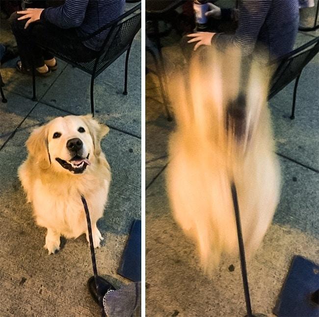 """17 kutya, aki tettével kétség kívül kiérdemelte a ,,jó kutya"""" jelzőt5"""