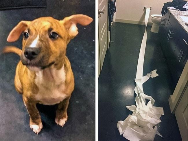 """17 kutya, aki tettével kétség kívül kiérdemelte a ,,jó kutya"""" jelzőt7"""