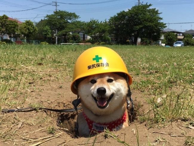 """17 kutya, aki tettével kétség kívül kiérdemelte a ,,jó kutya"""" jelzőt9"""