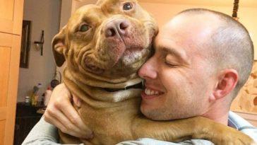 Ezt a magányos kutyát végre örökbe fogadta egy család és most csak mosolyogni tud