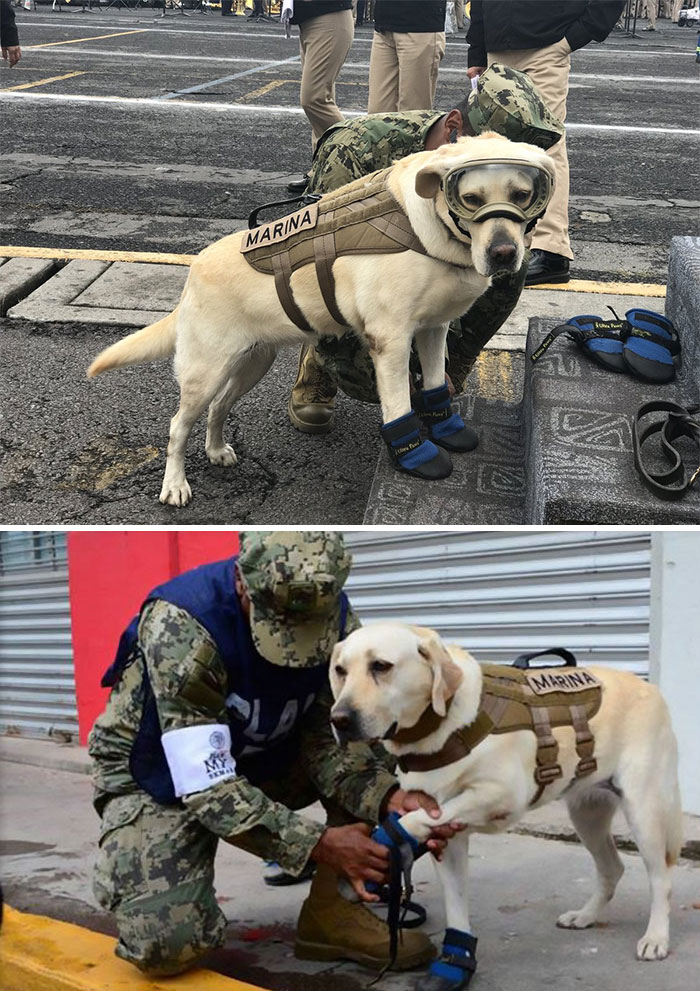 18 kutya, akit hősként könyveltünk el a tetteik miatt10