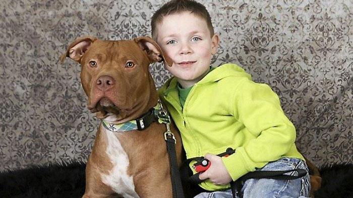 18 kutya, akit hősként könyveltünk el a tetteik miatt11