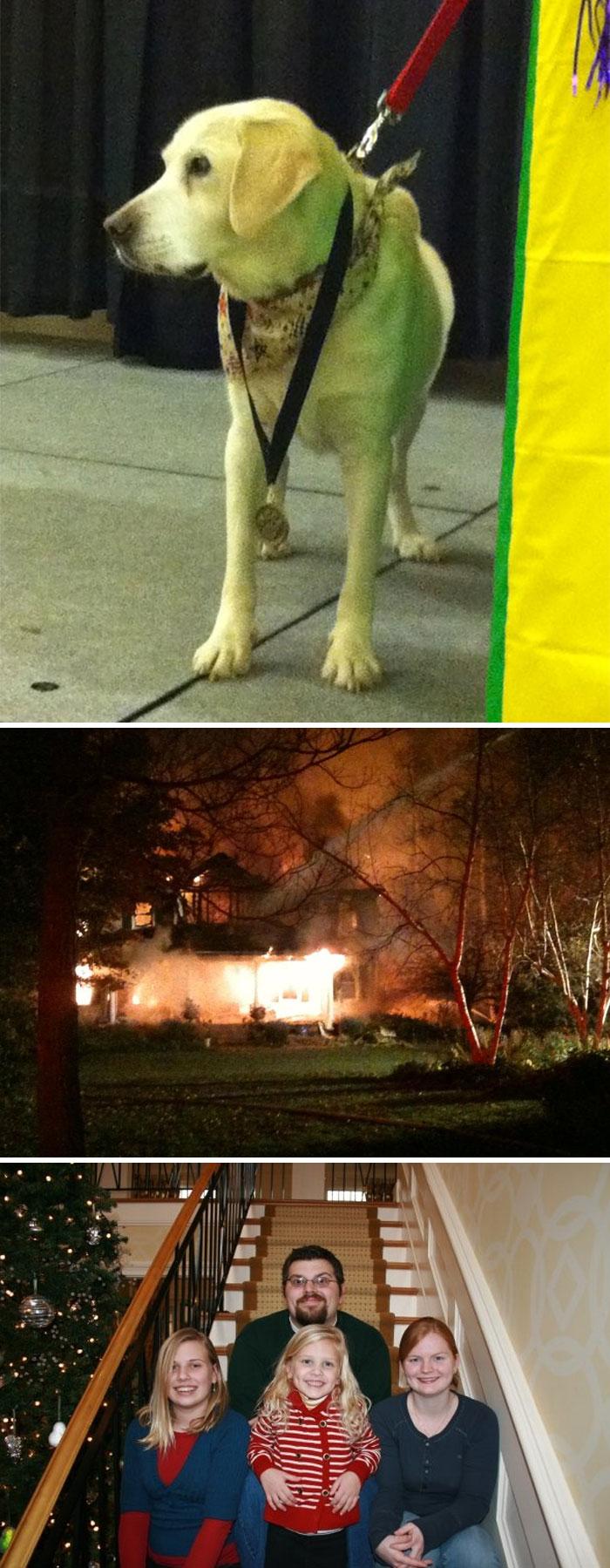 18 kutya, akit hősként könyveltünk el a tetteik miatt13