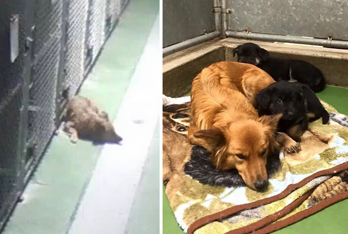 18 kutya, akit hősként könyveltünk el a tetteik miatt14