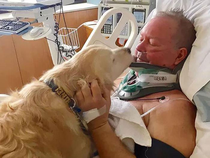 18 kutya, akit hősként könyveltünk el a tetteik miatt15