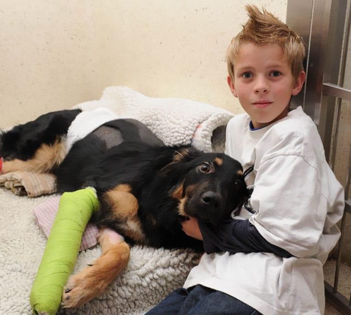 18 kutya, akit hősként könyveltünk el a tetteik miatt17