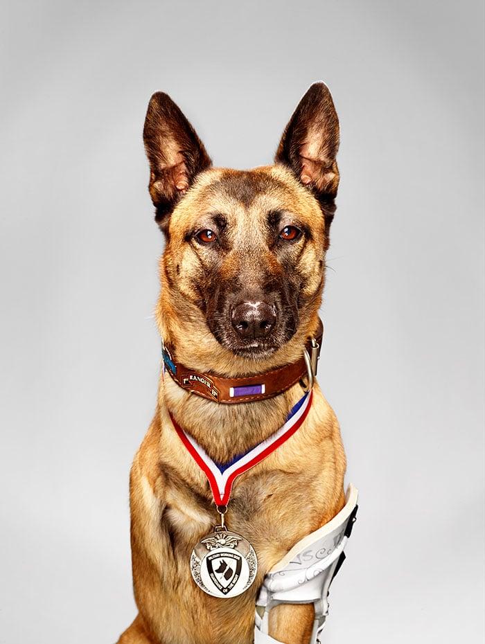 18 kutya, akit hősként könyveltünk el a tetteik miatt18