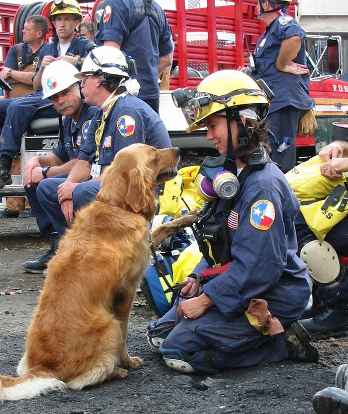 18 kutya, akit hősként könyveltünk el a tetteik miatt4