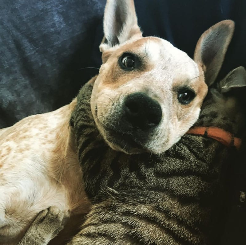 19 édes fotó cicákról és kutyákról10