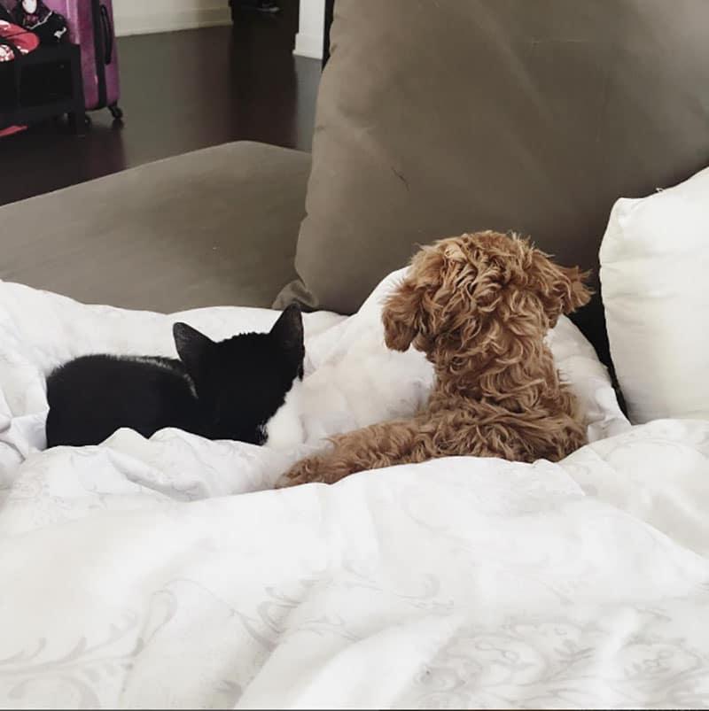 19 édes fotó cicákról és kutyákról11