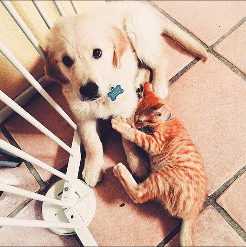 19 édes fotó cicákról és kutyákról12