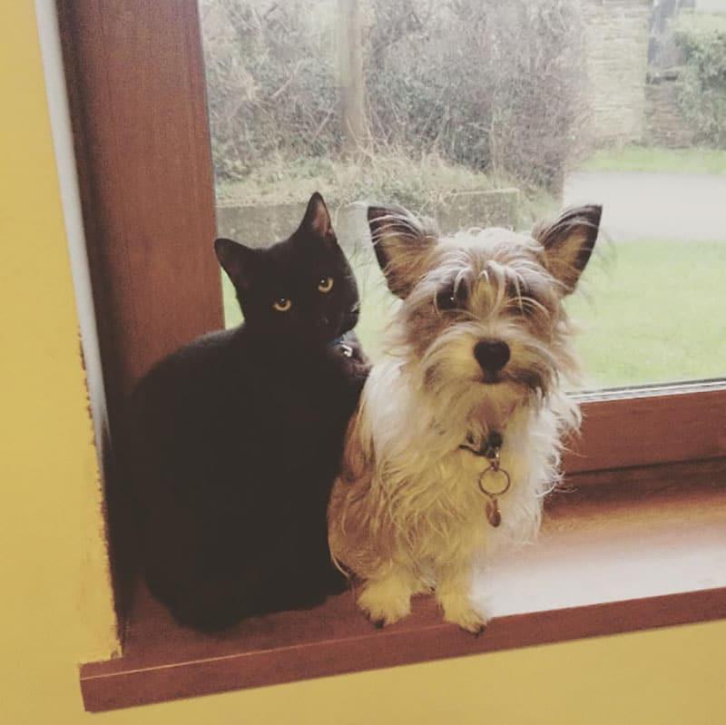 19 édes fotó cicákról és kutyákról13