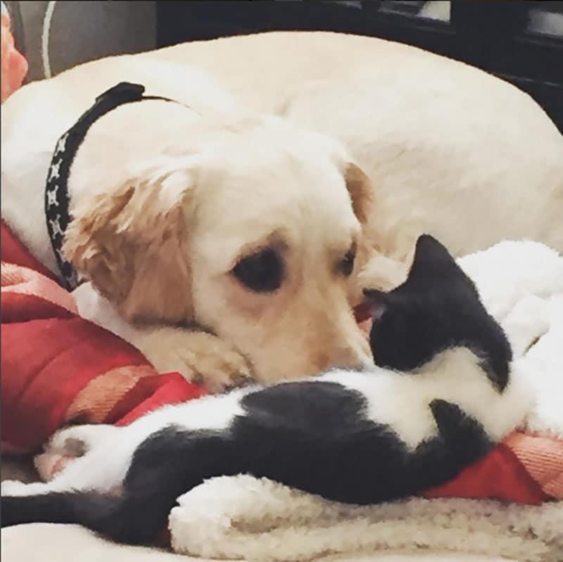19 édes fotó cicákról és kutyákról14