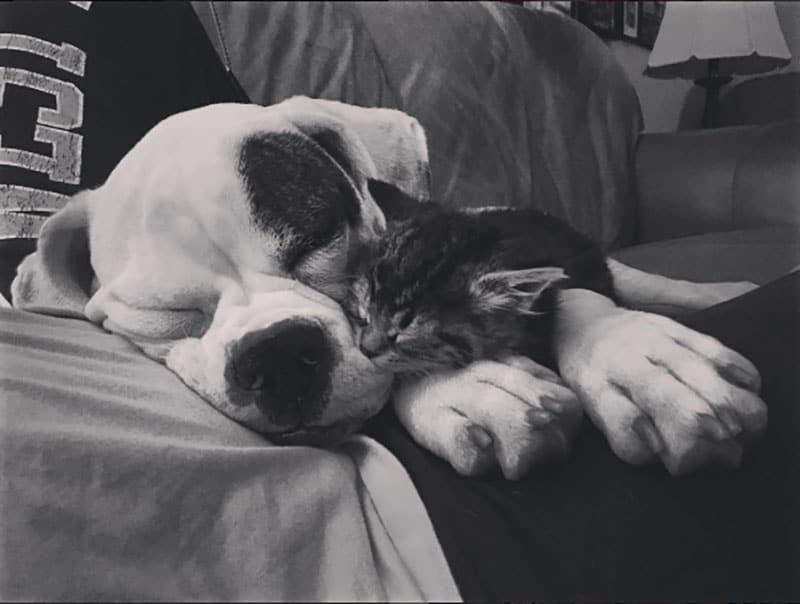 19 édes fotó cicákról és kutyákról16